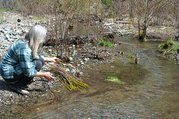 Riparian planting at Kelly Gulch